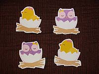 Baby Zoo theme Duck and owl hatchling in different colors