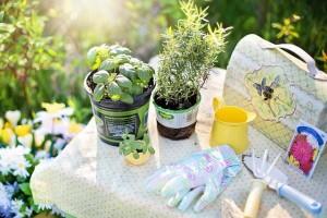 Green Planting Kit